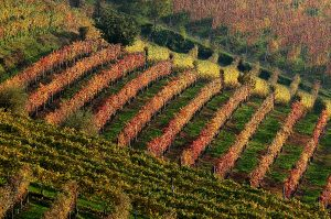 WINE and FOOD TOUR, LANGHE and MONFERRATO (Unesco World Heritage)