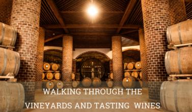 Walking through the vineyards and tasting wines cellar- Elite Luxury Tours