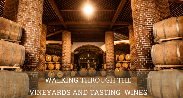 Walking through the vineyards and tasting wines cellar- Elite Luxury Tours