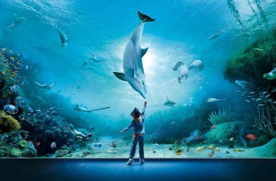 genova acquarium